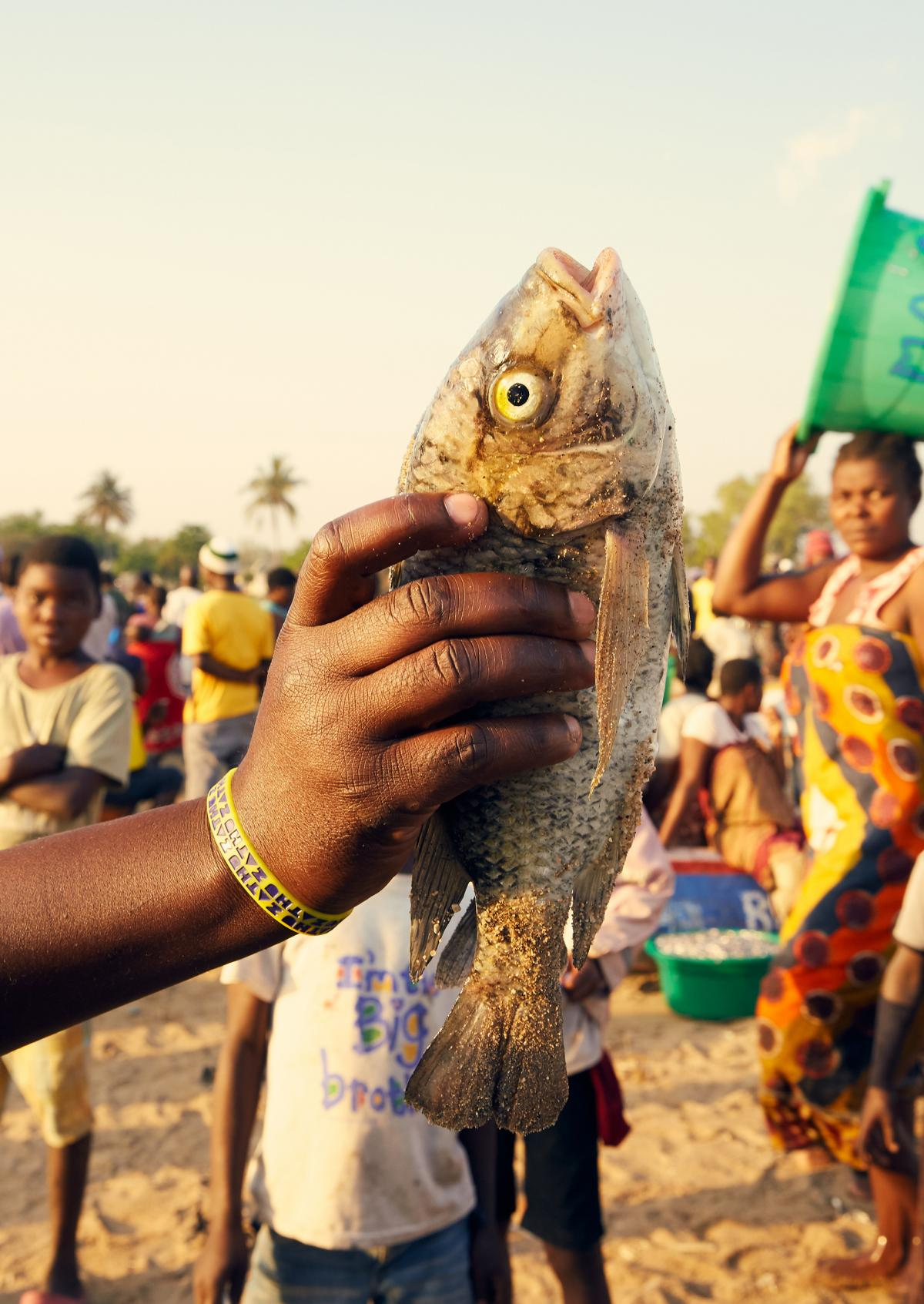 "A fisherman holds up a chambo — what locals call a type of tilapia native to Lake Malawi. Chambo is one of Malawi's most popular fish. Once it was plentiful, but now it is listed as ""critically endangered"" because of overfishing."