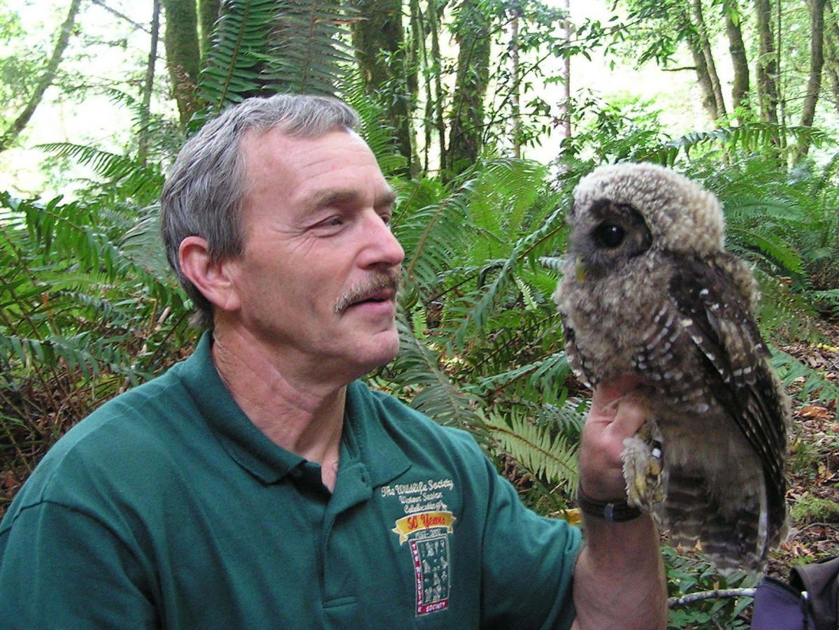 """Lowell Diller holds a fledgling spotted owl that he banded at a site where barred owls had been removed. """"This owlet would almost certainly not be alive today without active intervention,"""" he says."""