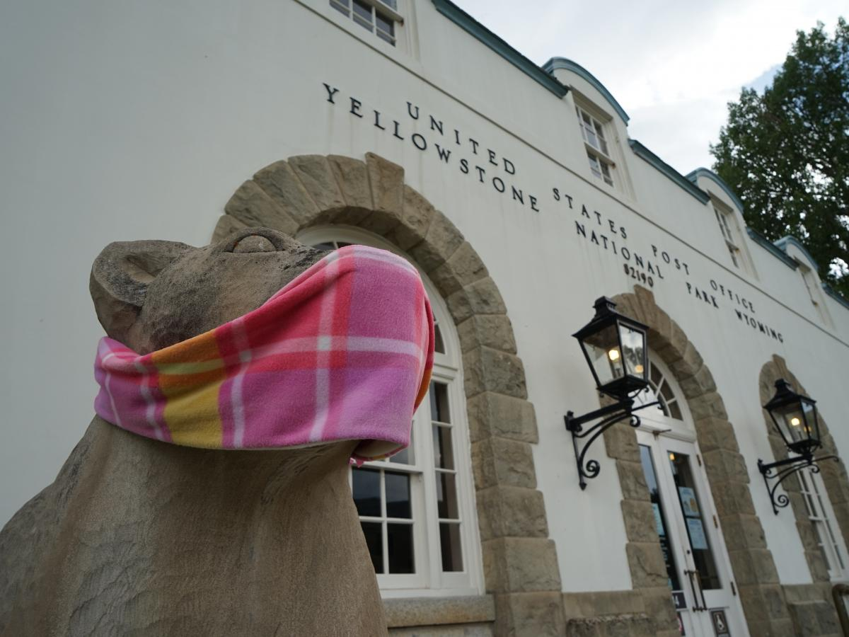 Bear statues at Yellowstone National Park's headquarters wear masks to remind visitors to take precautions against the coronavirus. Masks, though, are not mandatory in the park.