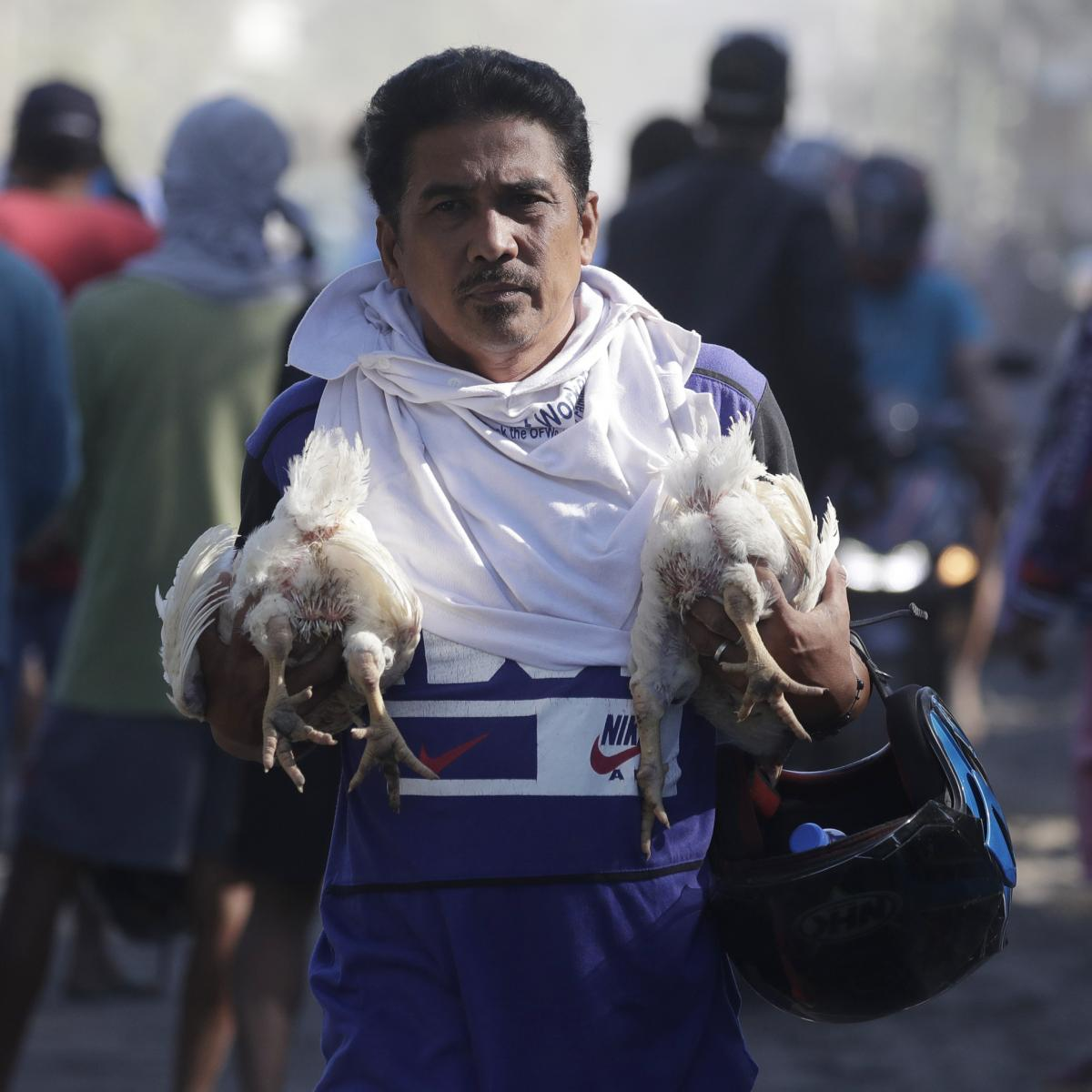 A man carries chickens as authorities enforced total evacuation of residents living near Taal Volcano in Agoncillo town, Batangas province, on Thursday.