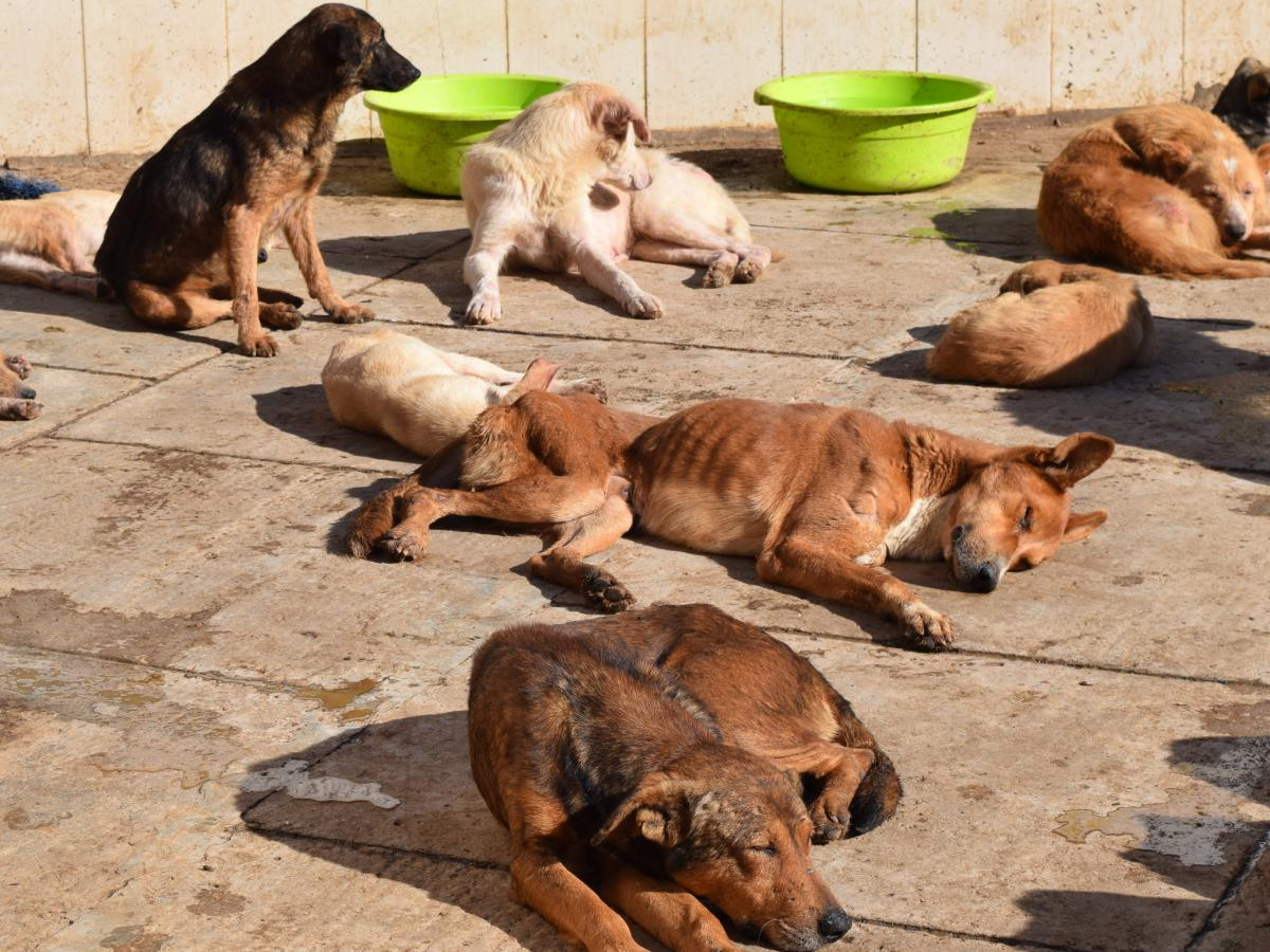 Pups lounging in the afternoon sun at ADAN's dog shelter. Less than 10 percent of the 400 dogs here will be adopted.