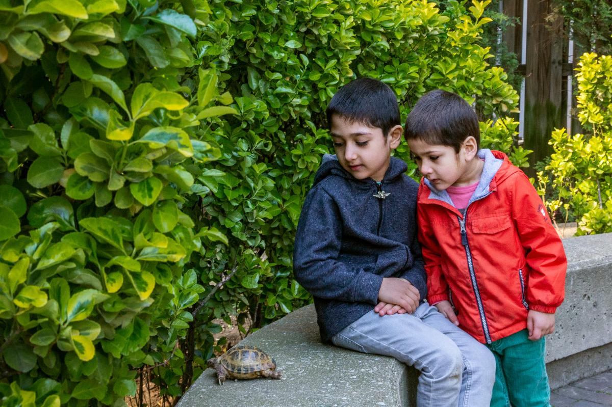 First-grader Aram Agha and his 3-year-old brother, Ellias Agha, watch Holly the Russian tortoise in the yard of their apartment complex in Brooklyn.