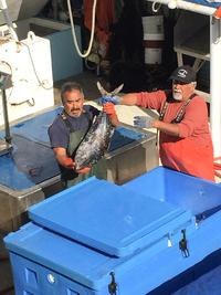 Workers get more bluefin tuna from the deck of the Barbara H., David Haworth's vessel, to bring up on the dock for sale.