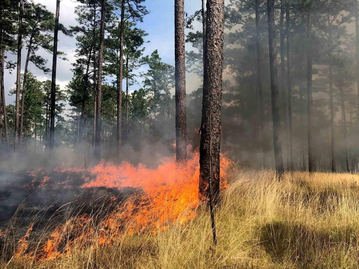 Eleven Southern states, including Georgia, have burn manager certification programs. As a result, controlled burning has become part of the social fabric.