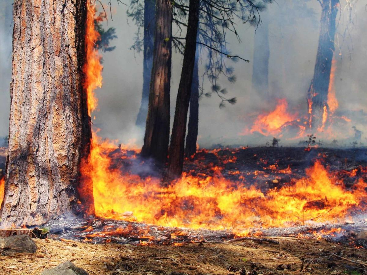 Experts say low-grade controlled burns are a crucial tool to limit extreme fires on millions of acres in the Western U.S.