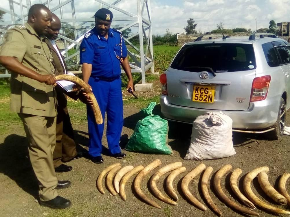 Elephant tusks (Oloxodanta Africana) were seized by Kenya Wildlife Service during field patrols carried out as part of Operation Thunderball.