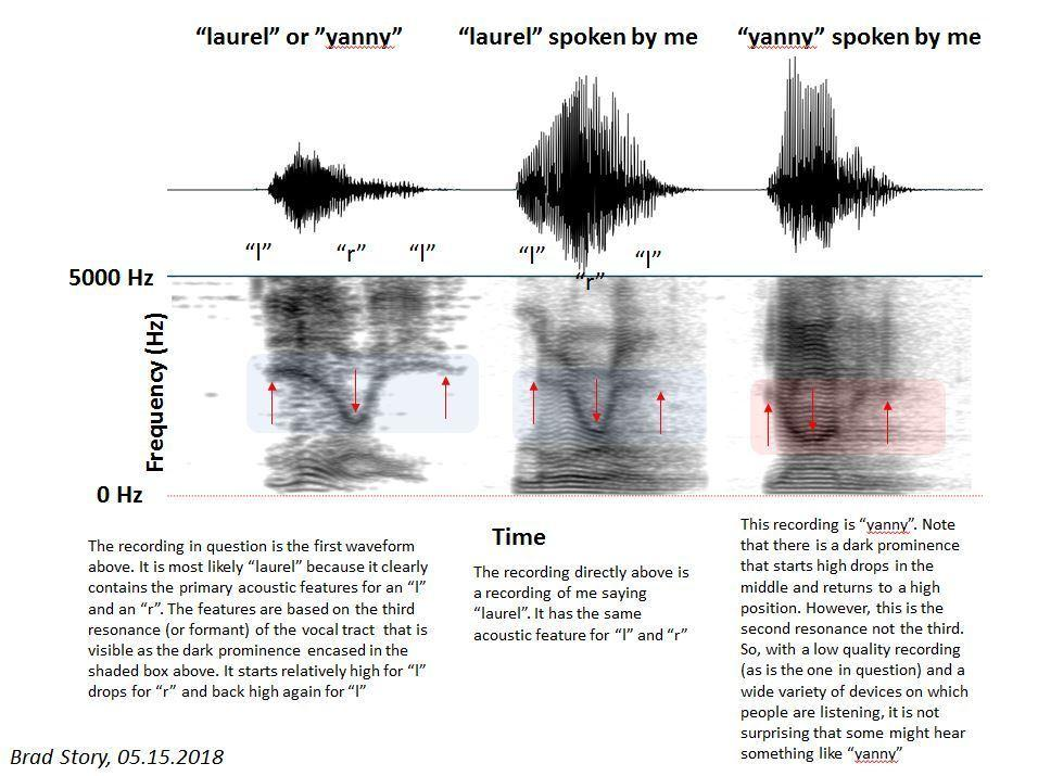 """Professor Brad Story analyzed the acoustic features of the words """"yanny"""" and """"laurel"""" from the viral audio clip and from his own voice."""
