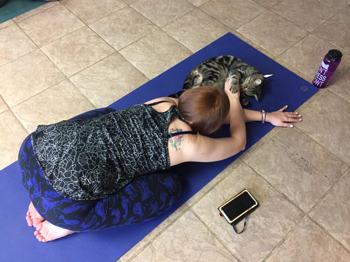 Marliese Thomas has only one cat, a female ginger who doesn't like others, so the yoga class is a good way for her to enjoy the company of other cats.