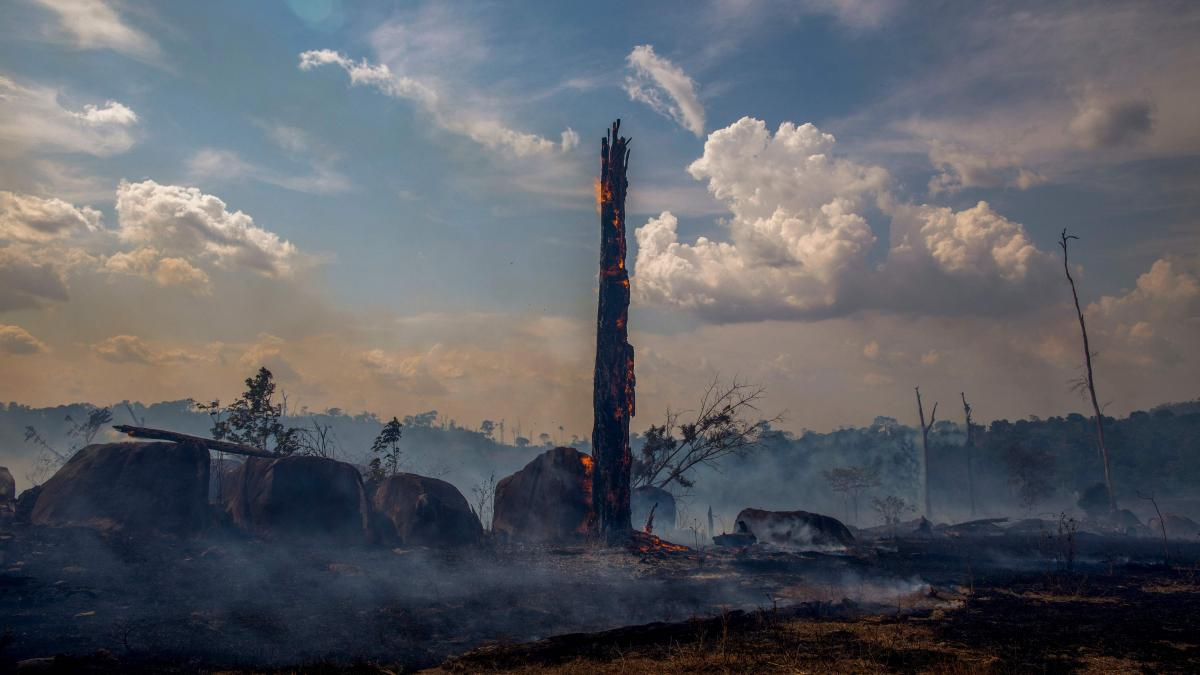 A burned trunk stands amid the devastation left after wildfires tore through parts of Brazil's Amazon rainforest earlier this year. During the yearlong period ending in July, deforestation claimed a span of the Amazon 12 times the size of New York City.