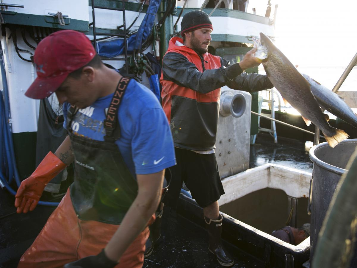 Aboard the fishing vessel Marathon, Nicholas Cooke (left) and Nathan Cultee unload 16 farm-raised Atlantic salmon into a container on Tuesday in Bellingham, Wash.