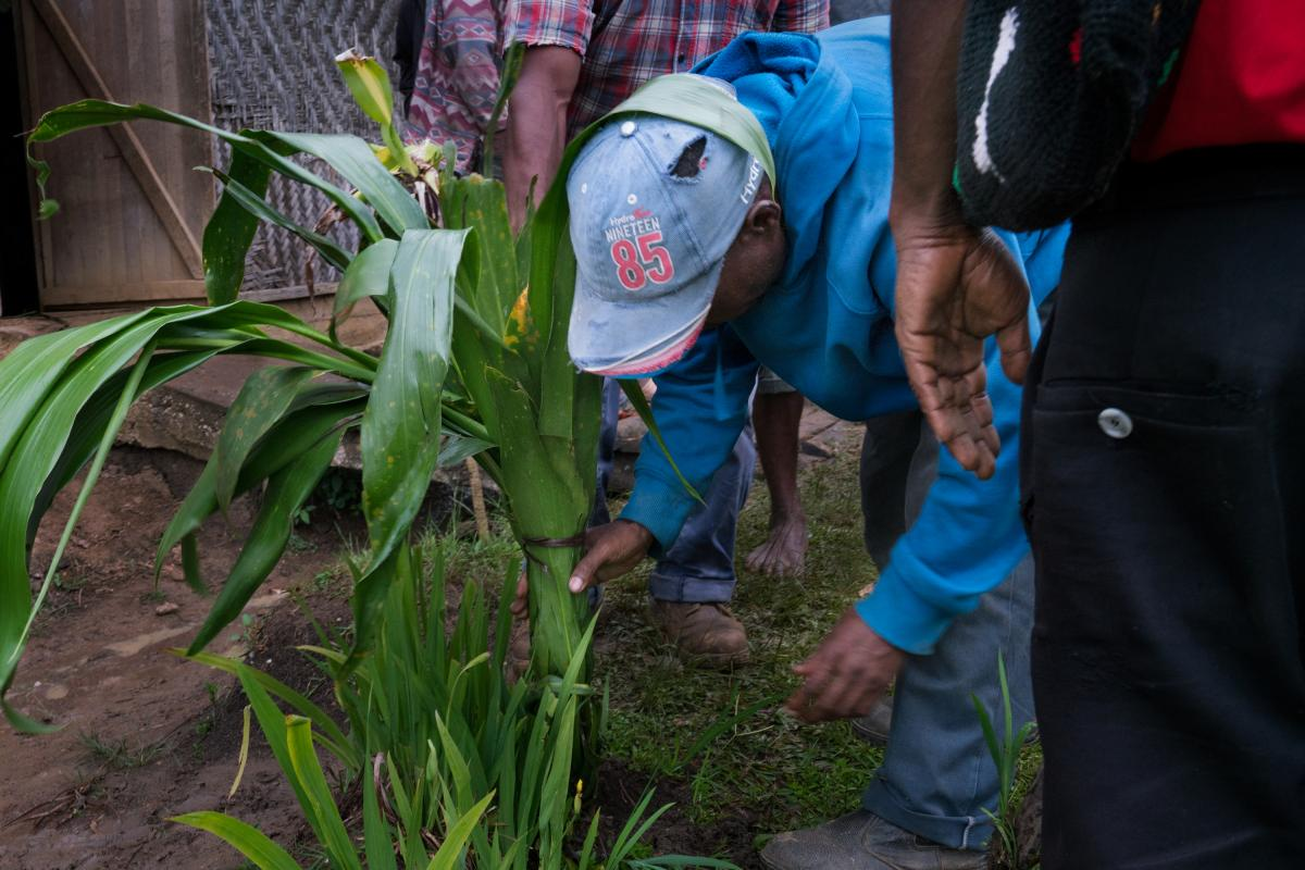 At the end of a cease-fire meeting, people plant a tanket, a kind of palm lily, together. The tree that grows is meant to symbolize harmony at the end of the process.
