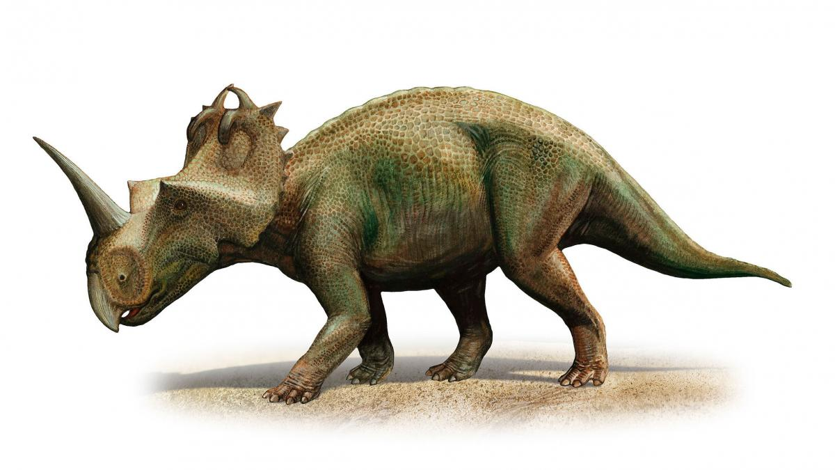Scientists in Canada have diagnosed malignant cancer for the first time in a dinosaur, a Centrosaurus apertus from 76 to 77 million years ago.