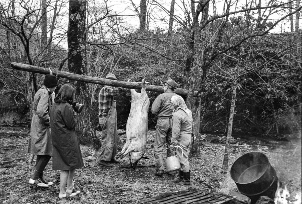 In an image from the first Foxfire book, students in 1969 look on as Hobe Beasley, John Hopper and Hopper's wife suspend a hog for finishing the work of scalding and scraping.