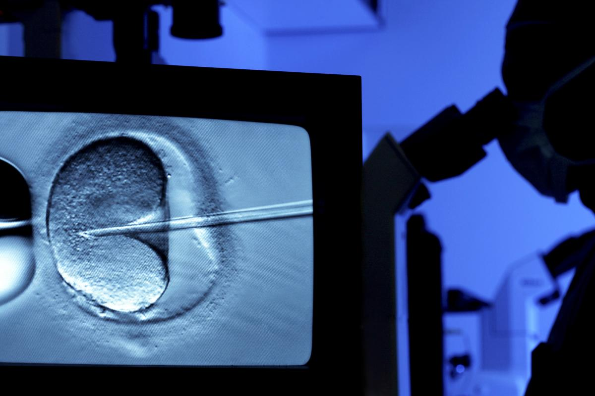 In the technique known as intracytoplasmic sperm injection, a fertility specialist uses a tiny needle to inject sperm into an egg cell.
