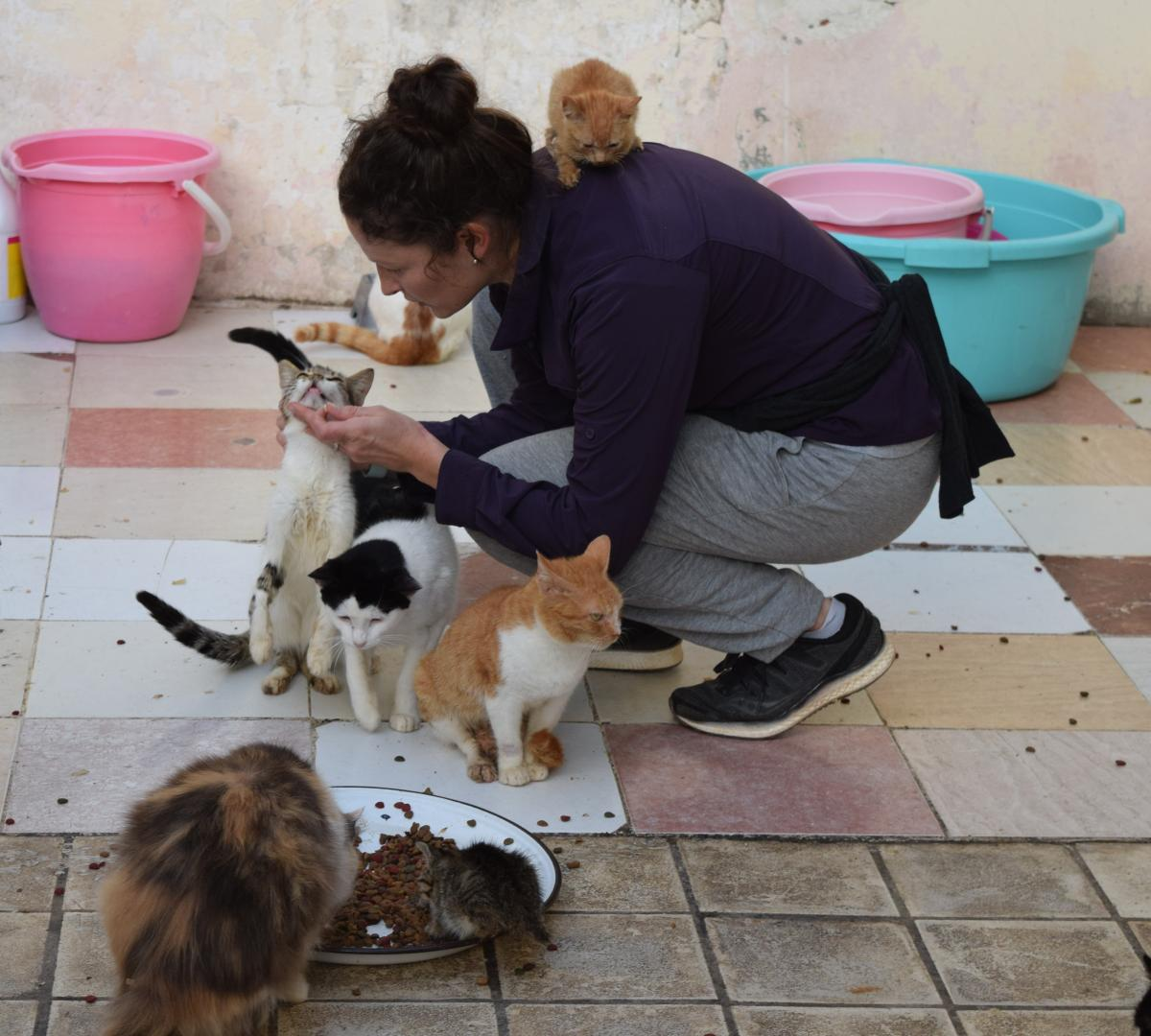 Volunteer Kaitlyn Schultz spends her Saturdays tending to some 50 cats on this Rabat rooftop.