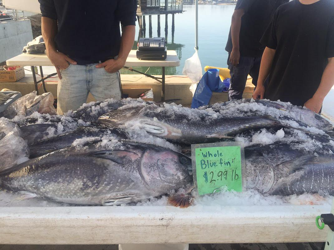 Pacific bluefin tuna for sale for $2.99 per pound at the fish market in San Diego. That shockingly low price does not reflect the deeply threatened state of the bluefin population.