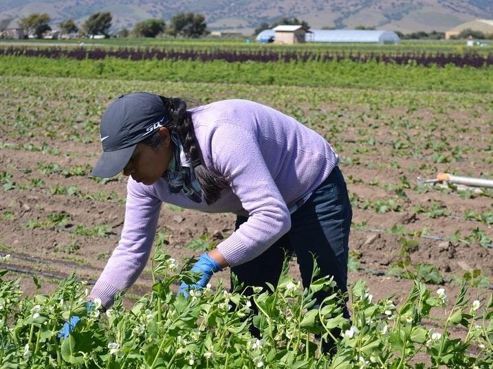 Agricultural work, which is physically demanding, is also a risky business venture.