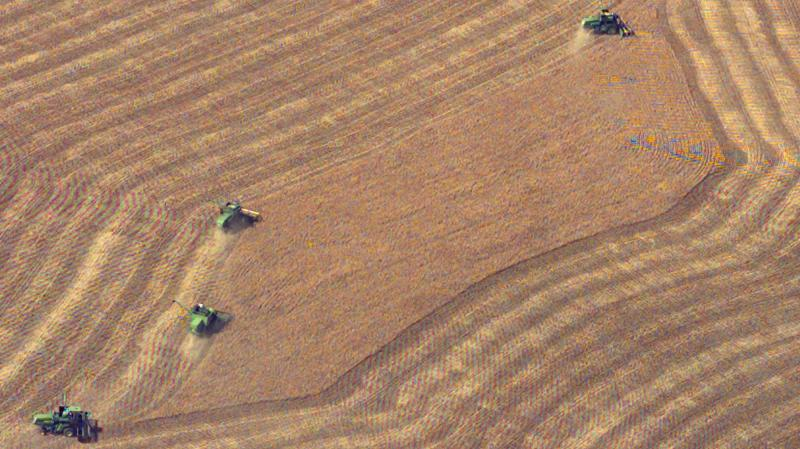 Harvest wheat from a field near Wright, Kan. May 10, 2004.