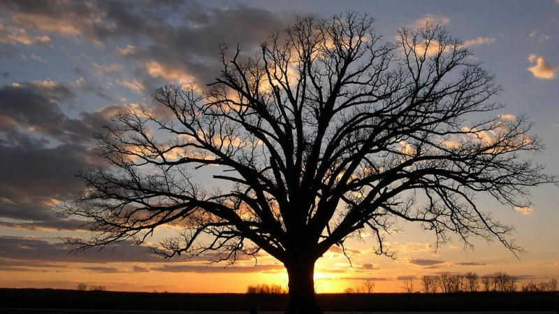 "This bur oak, called ""The Big Tree"" by Missouri locals, has been around for centuries. When a drought hit the state last year, the community came together to offer help and water for the iconic tree."