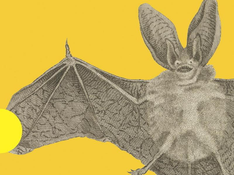 Cover: Vampires In The Lemon Grove
