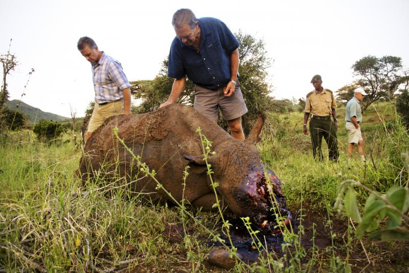 Mike Watson (left), CEO of Kenya's Lewa Conservancy, and conservationist Ian Craig identify the carcass of a 4-year-old black rhino named Arthur, whom poachers had killed the night before. The well-armed, well-informed poachers very likely used night visi