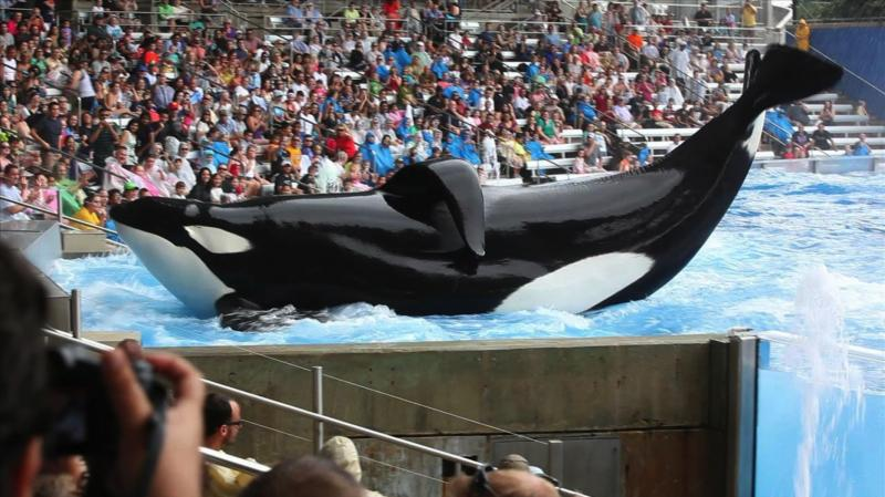 The new documentary Blackfish looks at the practice of keeping orca whales in captivity.