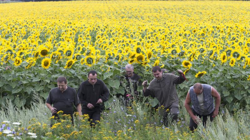Ukrainian coal miners search the crash site of the Malaysia Airlines plane near the eastern village of Rozsypne. The area is under the control of pro-Russian separatists who are fighting the Ukrainian government.
