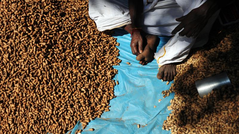 An Indian groundnut vendor waits for customers.