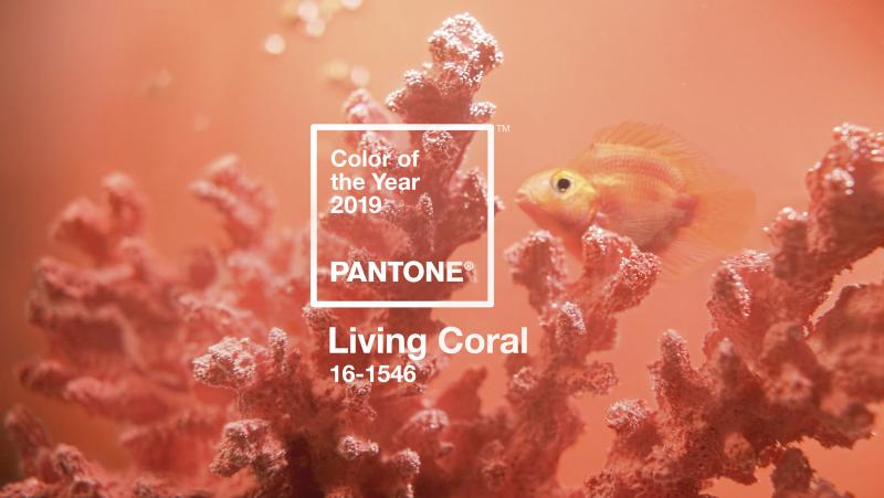 """Living Coral is the Pantone Color Institute's color of the year for 2019. The vibrant hue represents """"the fusion of modern life,"""" the institute explains."""