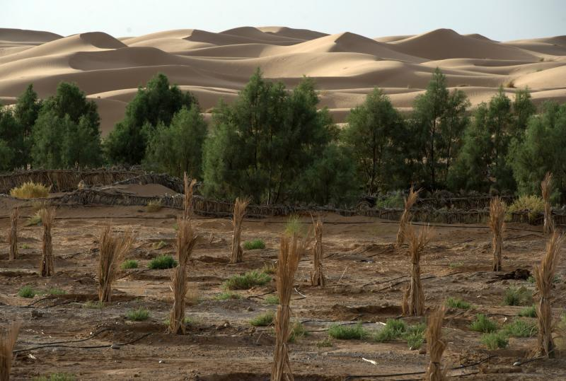 A Scientist Dreams Up A Plan To Stop The Sahara From Expanding