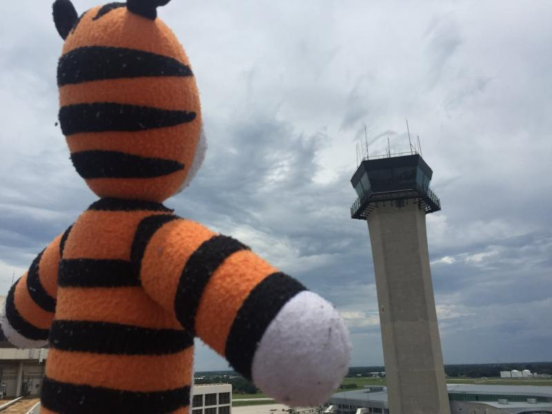 Hobbes the tiger surveys the scene at Tampa International Airport, where he was briefly stranded.
