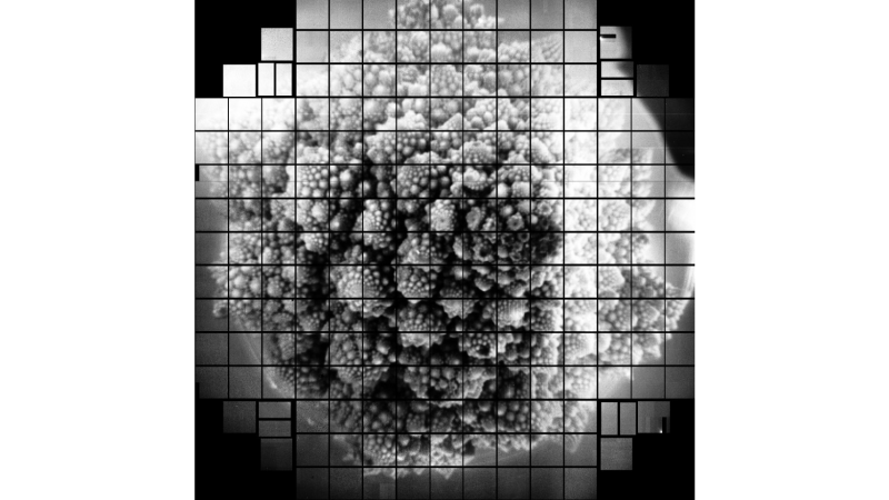 Romanesco broccoli, as seen by a 3.2 billion pixel camera. Scientists chose to take a picture of the broccoli because of its fractal shape.