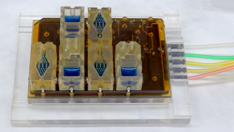 EVATAR is a book-size lab system that can replicate a woman's reproductive cycle. Each compartment contains living tissue from a different part of the reproductive tract. The blue fluid pumps through each compartment, chemically connecting the various tis