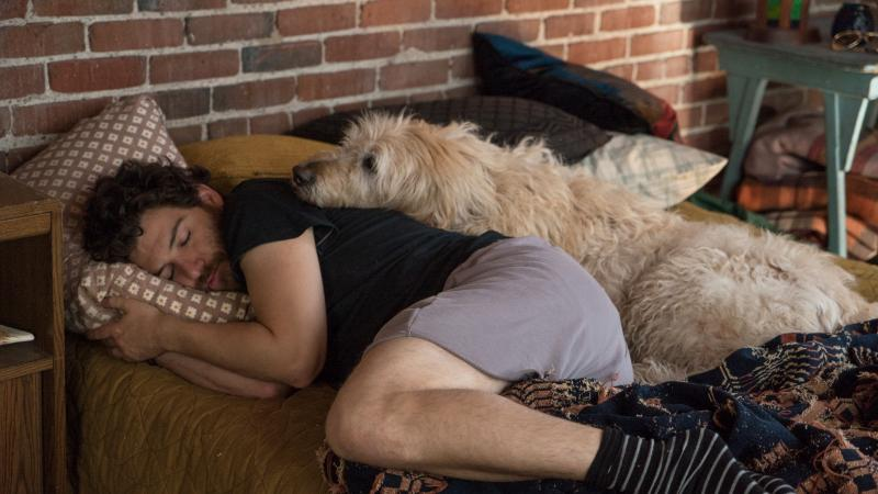 Dax (Adam Pally) and friend/comforter in Dog Days.