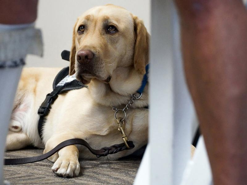 The number of pets on planes has become a hot-button issue of late as emotional support animals have become more common than ever.