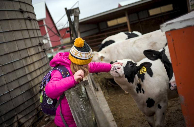 Not only are kids raising animals and learning the how-tos of vaccinations and record-keeping, 4-H'ers are also being taught how to add up the costs and weigh them against future profits.