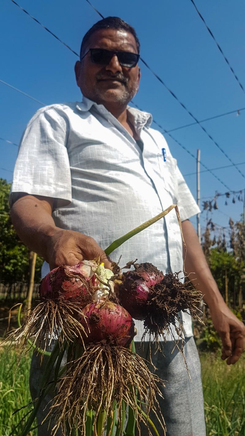 Sanjay Sathe, 44, grows onions on about an acre of land on a roadside in India's Maharashtra state. His family farm prospered under his grandfather and father, but now he has to raise goats because the price of onions keeps falling.