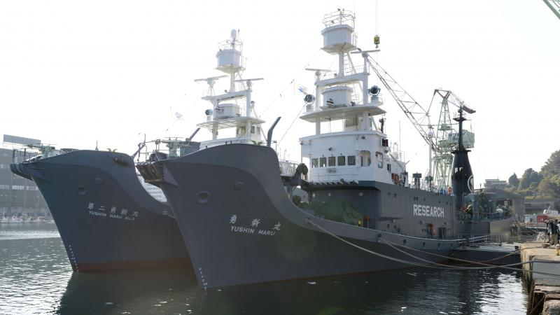 """Japan once labeled its whaling vessels with prominent """"Research"""" tags. The country will resume commercial whaling hunts in 2019. Here, the whaling ships Yushin Maru (right) and Yushin Maru No. 2 are seen before leaving for the Antarctic Ocean for a whale"""