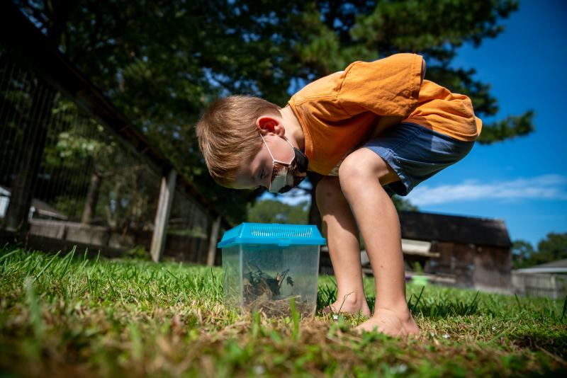 Lachlan Barilleau, 5, enjoys catching insects in his backyard in Central, near Baton Rouge, La.