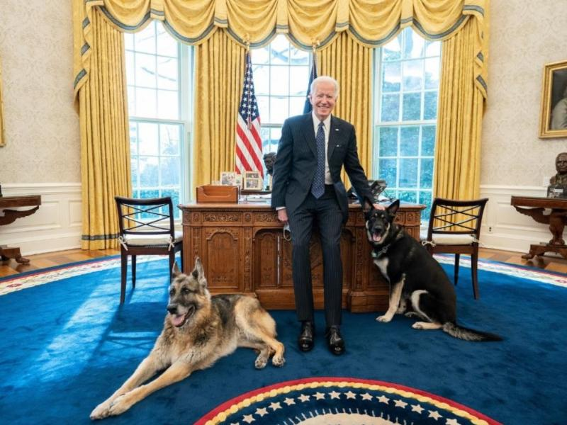 """Major, pictured on the right, was reportedly spooked by someone on Monday and allegedly """"nipped"""" at them. White House officials said a doctor was called but no further treatment was needed."""