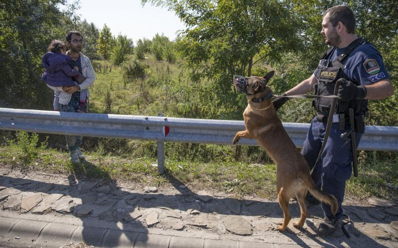 A man is confronted by a Hungarian police officer with a dog as he holds his daughter in an area where migrants ran over a motorway from a collection point set up to transport people to camps in Morahalom, Hungary, Wednesday.