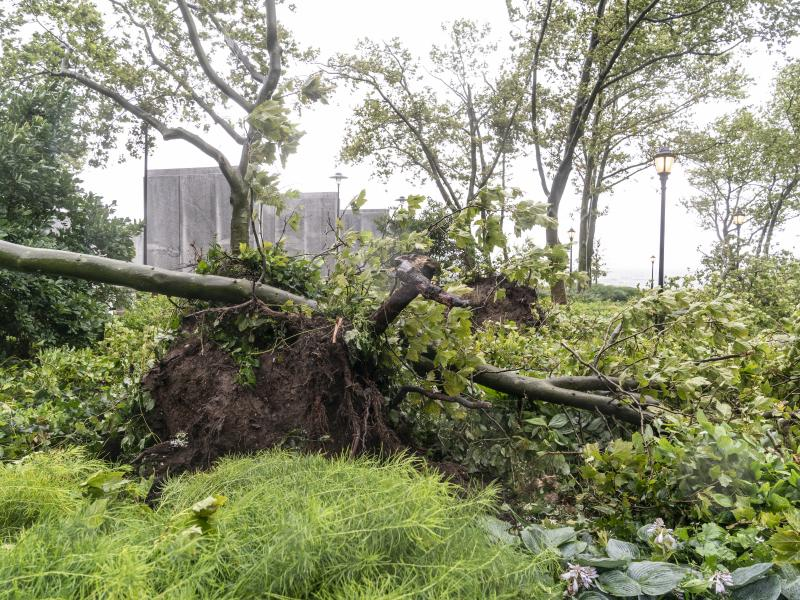 Tropical Storm Isaias downed wires and uprooted trees, like this one in New York City, leaving millions of customers without power in parts of the Mid-Atlantic and Northeast on Wednesday. The governors of Connecticut and New York have each declared a stat