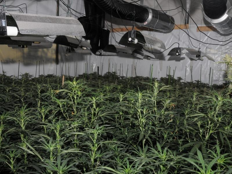 """Photo released by the City of London Police showing the first """"cannabis factory"""" discovered in the City."""