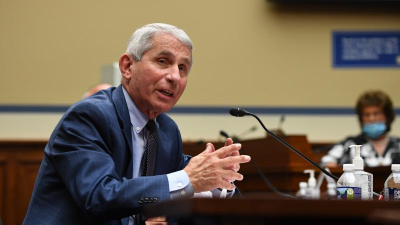 Dr. Anthony Fauci, director of the National Institute for Allergy and Infectious Diseases, is pictured in a hearing on July 31. He is testifying on Wednesday alongside other top health officials in a Senate panel hearing.
