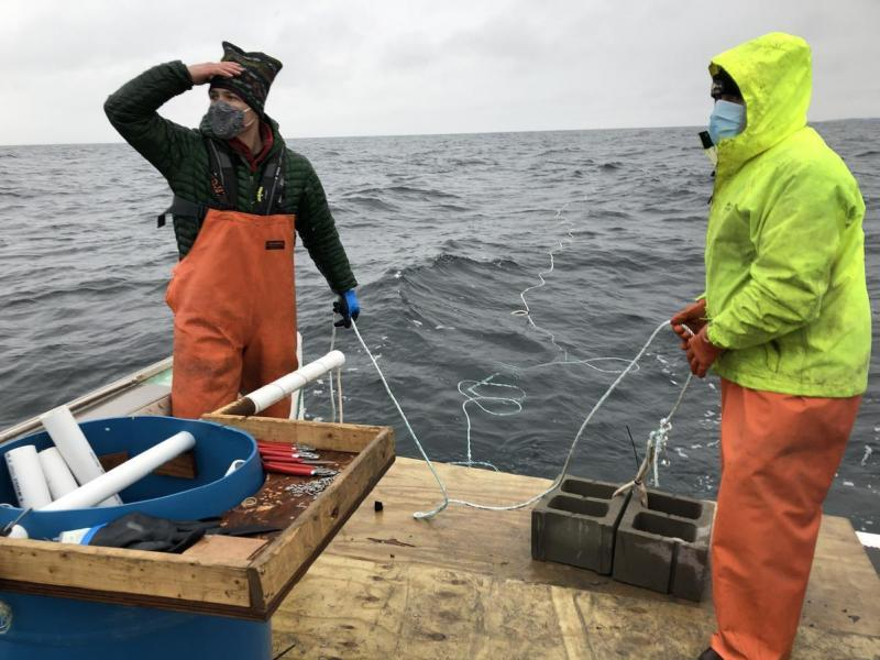 Adam Baske (left) and Capt. Rob Odlin of Running Tide Technologies in the Gulf of Maine. They release rope that's entwined with early-stage kelp, a fast growing seaweed that will soak up carbon dioxide.