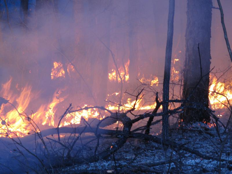 Winter is peak time for prescribed burns, deliberately set fires designed to eliminate leaves and other flammable material that could fuel a larger forest fire. But the partial government shutdown is interfering with this and other preparations for the fi