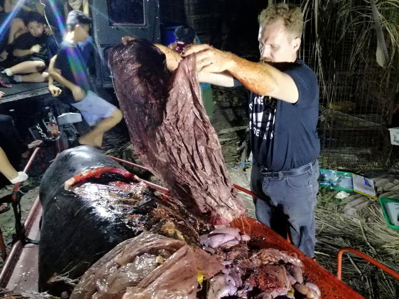 Darrell Blatchley, environmentalist and director of D' Bone Collector Museum, shows plastic waste found in the stomach of a Cuvier's beaked whale near the Philippine city of Davao.
