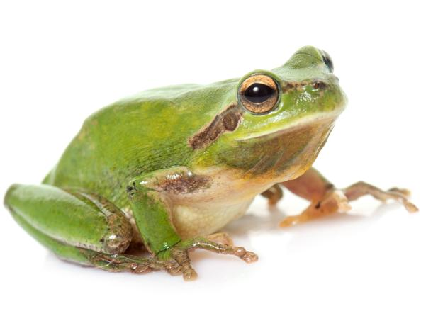 Frog meat is among the many items imported from China that had been facing tariffs in a few weeks, but now the tariffs are delayed until December.