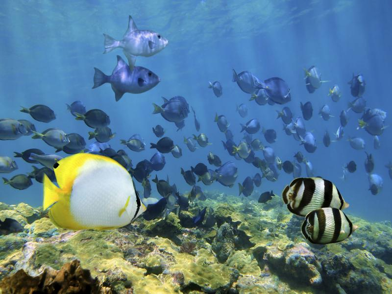 """Shoal of tropical fish over a coral reef in the Caribbean Sea. From pristine forests to vivid reefs, Cuba """"has it all,"""" say ecologists eager to study the island habitats."""