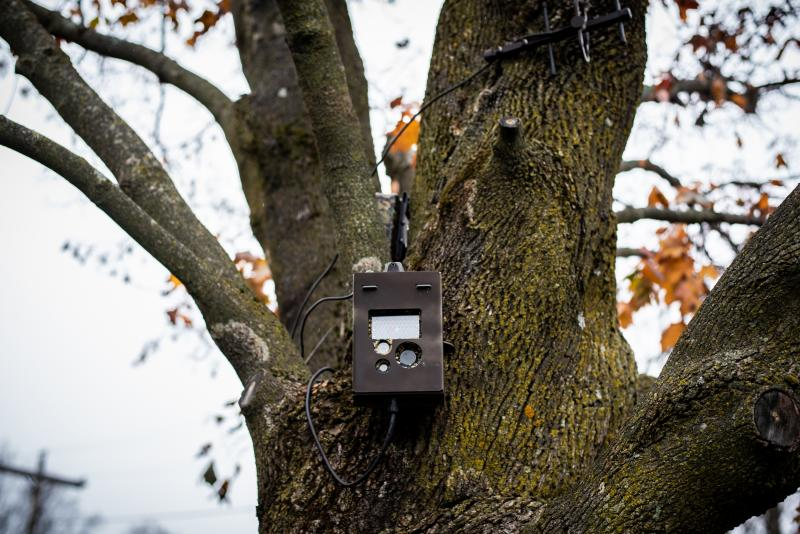 A motion triggered camera is mounted to a tree pointed toward a soft border crossing on the Haskell Free Library & Opera House, which is bisected by the border.